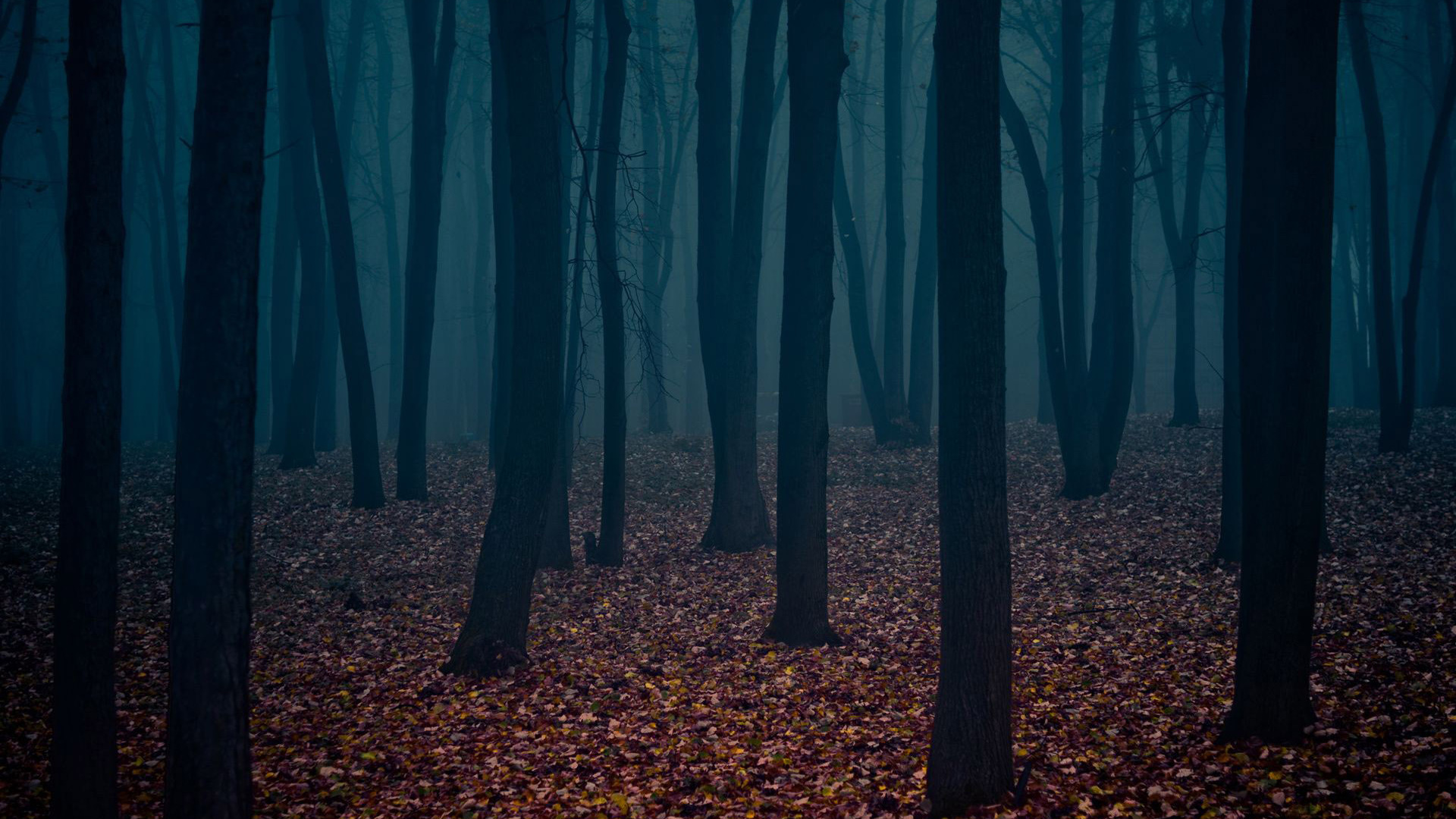 dark-autumn-forest-nature-hd-wallpaper-1920x1080-2520